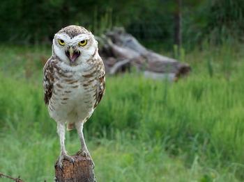 owl-774518_1280.jpg